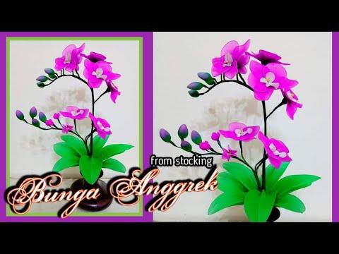Bunga Anggrek dari