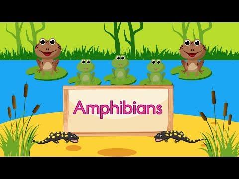 Amphibian Song