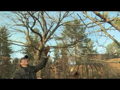 Obstbaumschnitt Der Kurs Praxis Der Schnitt Kap.11+12