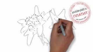 Как нарисовать цветок карандашом поэтапно(Как нарисовать дружную семью поэтапно карандашом за короткий промежуток времени. Видео рассказывает о..., 2014-07-02T05:41:00.000Z)