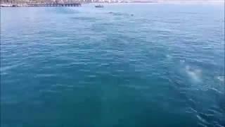 Longest human underwater chain - Guinness World Record (Cyprus 2016)