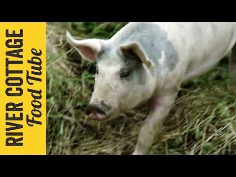 Keeping Pigs - Part 1   Hugh Fearnley-Whittingstall