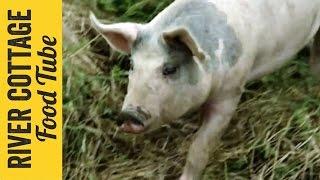 Keeping Pigs - Part 1 | Hugh Fearnley-Whittingstall