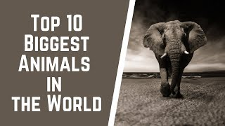 Top 10 Biggest Animals in the World  by learning a to z