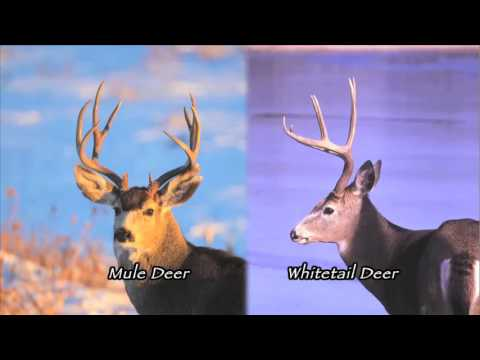 Nebraska Outdoor Heritage - Deer