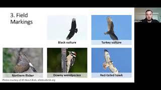 Basics of Birdwatching