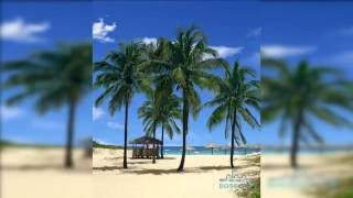 Beach Palms 3D Live Wallpaper
