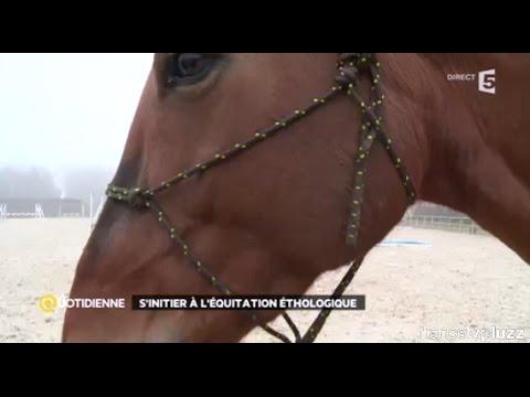 Comprendre son cheval grâce à l'équitation éthologique