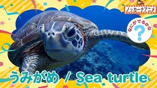 【水族館クイズ】海の生き物なーんだ?楽しく知育【赤ちゃん・子供向けアニメ】Sea creatures animation for kids