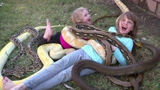 Самые ядовитые и опасные змеи мира