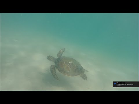 Clear water at Ponce Inlet, shark, turtle 08/23/16