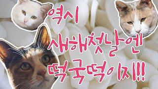 칠산떡방앗간 episode 5 - 새해첫날 가래떡 만들…