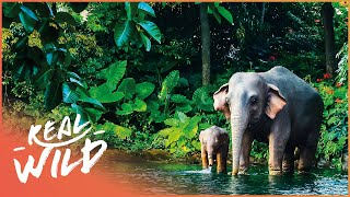 Wonderful World: Nature On Our Planet (Wildlife Documentary) | Real Wild