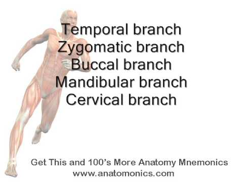Learn anatomy videos youtube