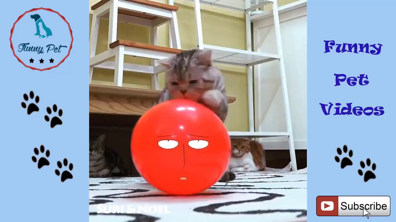 Funny Cat Videos For Kids Cute Cat Videos For Kids To Watch