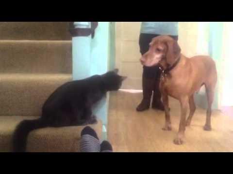 Cat Slaps dog