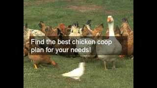 Buy Wooden Chicken Coops For Sale | Ideas & Designs & Plans For Cheap N Easy Wooden Chicken Coops
