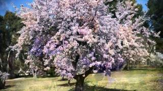 Vivaldi  - The Four Seasons (Le Quattro Stagioni) - SPRING - 432 Hz.