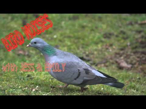"Bird Noises 1 - ""Storks. True or Real?"""