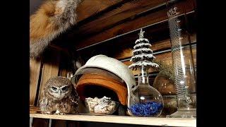 Домовый сыч Гнусь. Кто страшнее: сова или верёвочки?