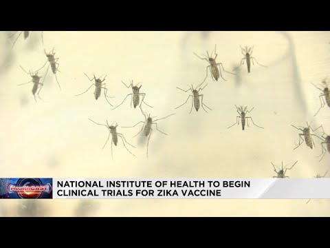 Strides Produced in Zika Vaccine Research