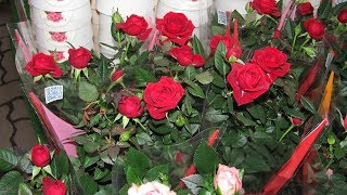 Как спасти комнатные розы из магазина