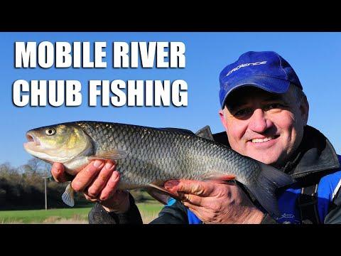 Mobile River Chub Fishing - Warwickshire Avon