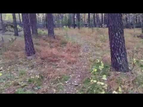 видео: Состязания по Барсуку Мара Берендей Октябрь 2015