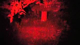 CoyoteLight Dim Feature vs. Leading Brand Red LED Flashlight