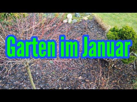 Garten im Januar Welche Gartenarbeiten im Januar zu tun sind Gartenpflege im Januar