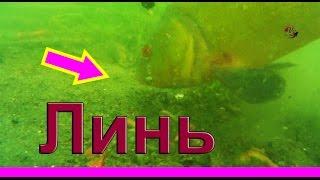 Поклевка ЛИНЯ под водой.  Lín, рыбалка онлайн. Рыбалка. Ловля линя на поплавок. fishing