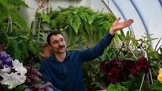 видео Как спасти сад от самых распространенных вредителей