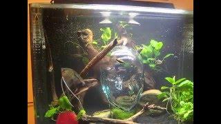 30 gal jbj rimless freshwater