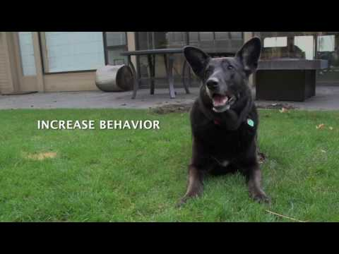 Dog Training Methods and Techniques
