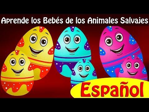 Huevos Sorpresas | Aprende los Bebés de los Animales Salvajes y Sonidos de Animales | ChuChu TV