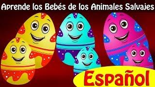 Huevos Sorpresas | Aprende los Bebés de los Animales Salvajes y Sonidos de Animales | ChuChu TV thumbnail