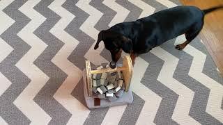 강아지 장난감 - 코나무 킁킁나무 돌돌이 노즈워크