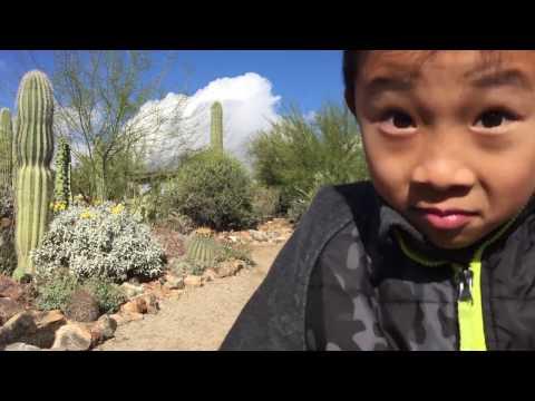 Arizona-Sonora Desert Museum, Tucson (bonus footage)
