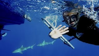 SWIMMING WITH SHARKS IN HAWAII... *without a cage*