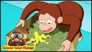 Curioso come George 🐵Dove va a finire la Spazzatura? 🐵Cartoni per Bambini 🐵George la Scimmia
