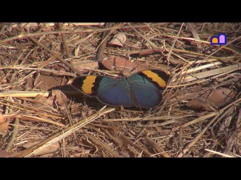 Malawi - Nkhotakota Wildlife Reserve