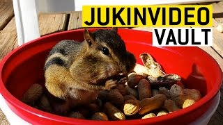 Cutest Animal Compilation from the JukinVideo Vault