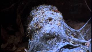 Friday the 13th Part 6 Opening Scene