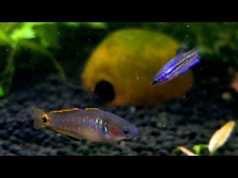 Little Fish - Big Personality. Fascinating Nano / Small Fish