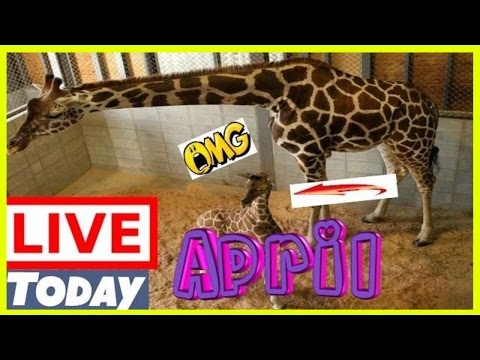 Spring watch webcam live now