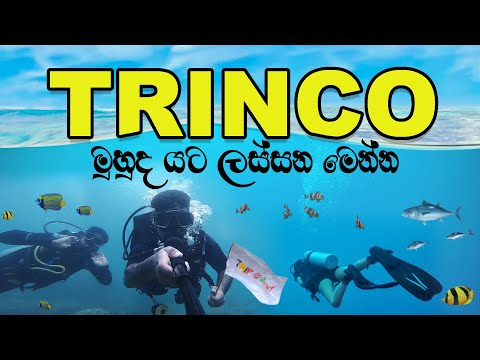 Trincomalee Travel Guide | Diving | VLOG #61