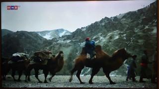西モンゴルのアルタイ山脈に住む遊牧民の移動にラクダは大活躍してます。