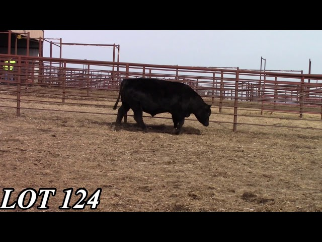 Mead Angus Farms Lot 124
