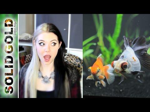 Goldfish Talk with Jennie
