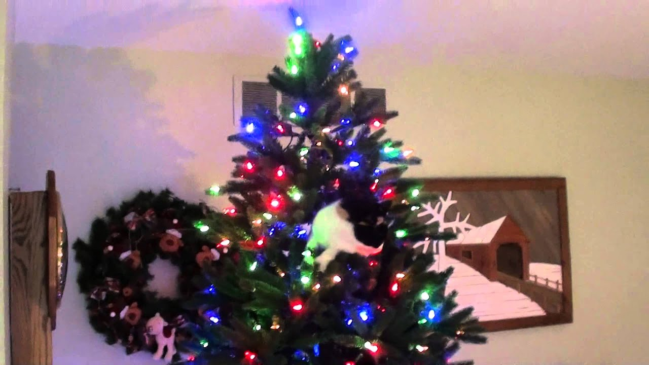 Cats see christmas tree for first time in youtube